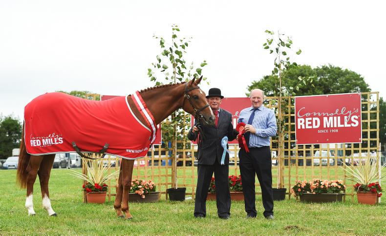 AROUND THE COUNTRY:  Oh Boss does it again at Tinahely for Holland