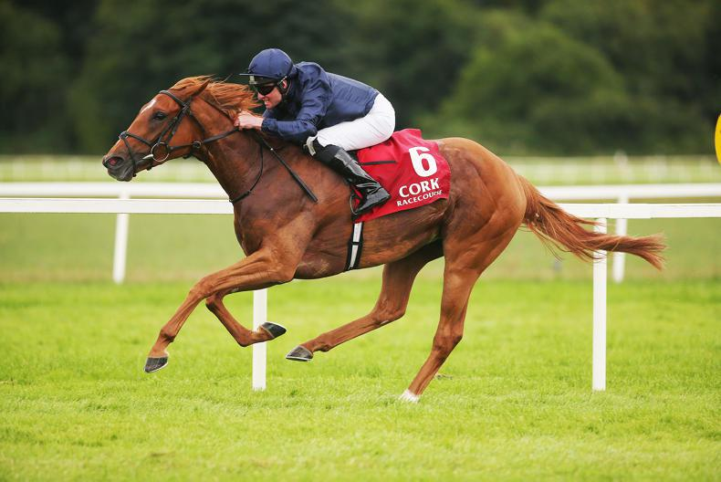 CORK SUNDAY : Group success for Sizzling
