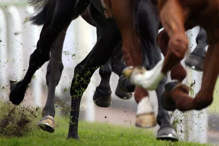 Former trainer Robin Bastiman disqualified for three years in cobalt case
