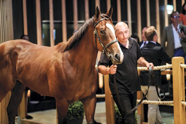 Godolphin swoops for €380,000 Siyouni colt