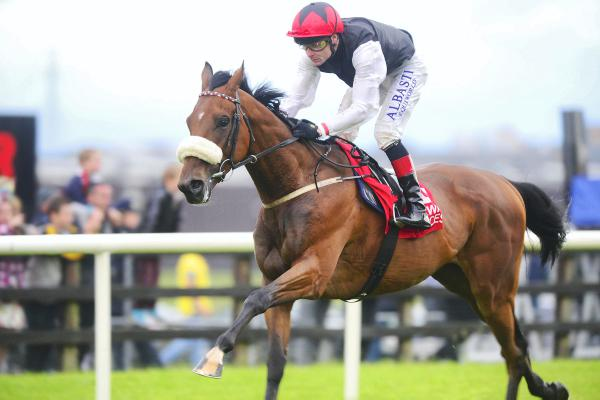 Forgotten Rules a rising star among stayers