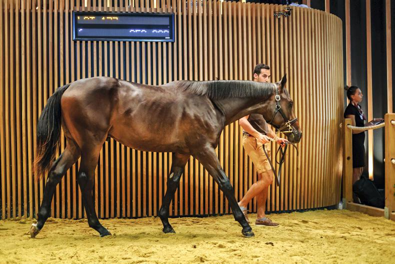 SALES: Not all plain sailing at Arqana