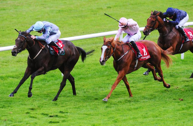 BREEDING INSIGHTS: Watson's Winter shines at Gowran Park