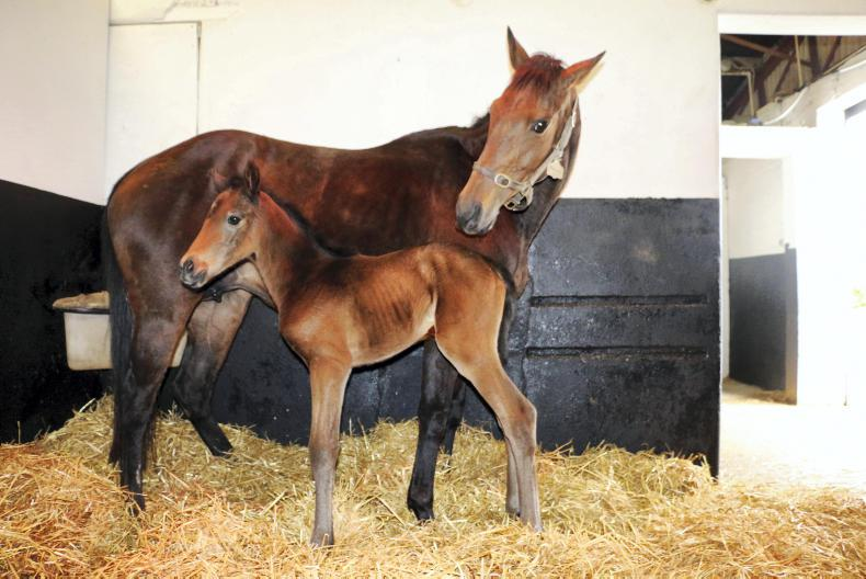 FOAL SALES PREPARATION FEATURE: A simple guide to foal preparation