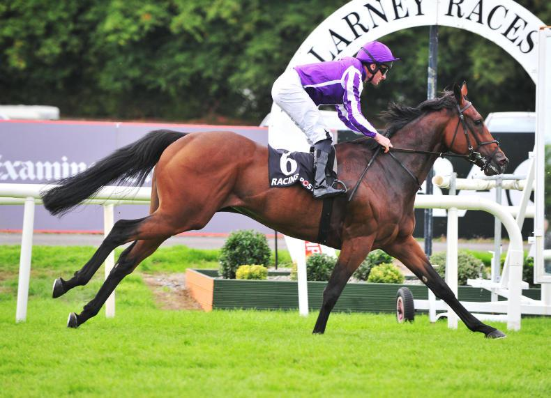 BREEDING INSIGHTS: Swinburns hoping Siyouni colt will Fly