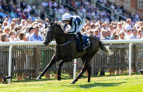 Alpha Centauri team building towards Matron Stakes date
