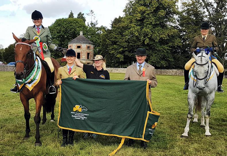 RACEHORSE TO RIDING HORSE: Smokey Bay wins supreme championship