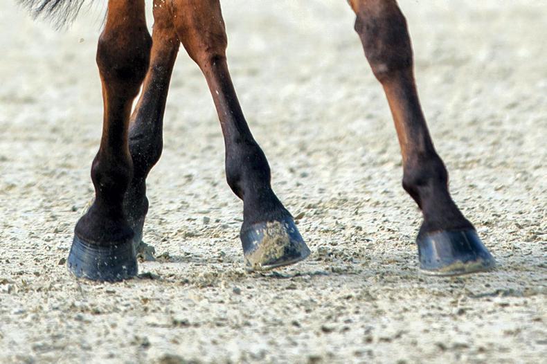 MILLSTREET HORSE TRIALS: Potential stars shine
