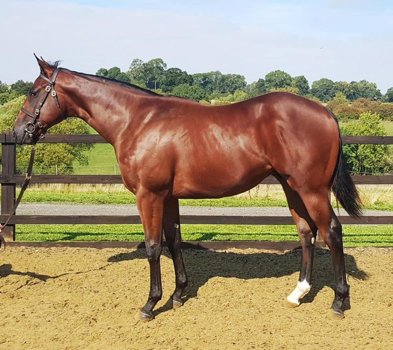 SALES: Son of Dandy Man heads to Ascot