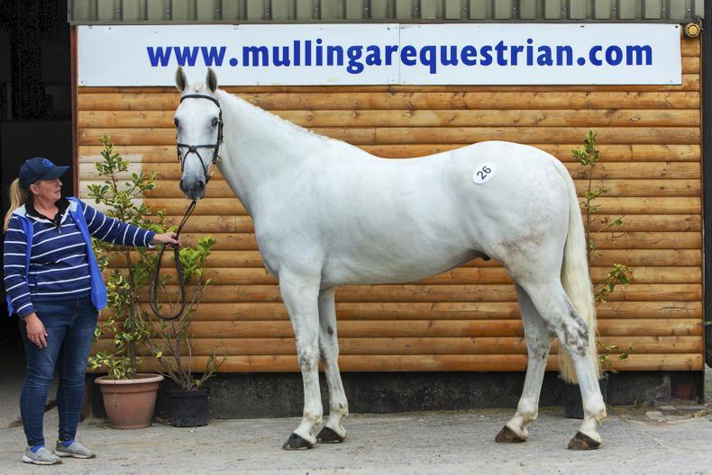 SALE:  Anni Flagmount tops Mullingar sale