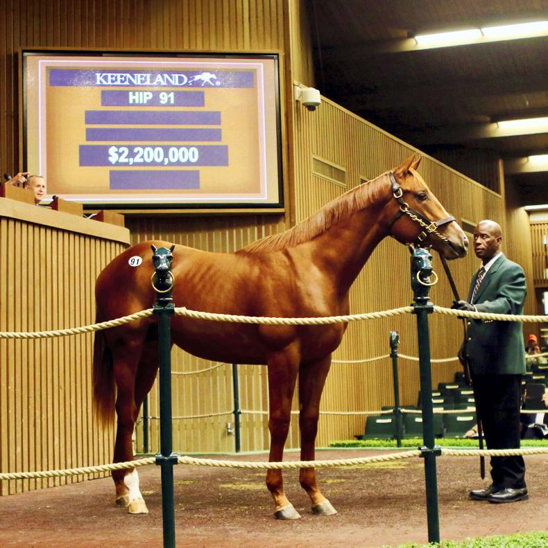 VIDEO: Godolphin buys $2.2 million American Pharoah colt
