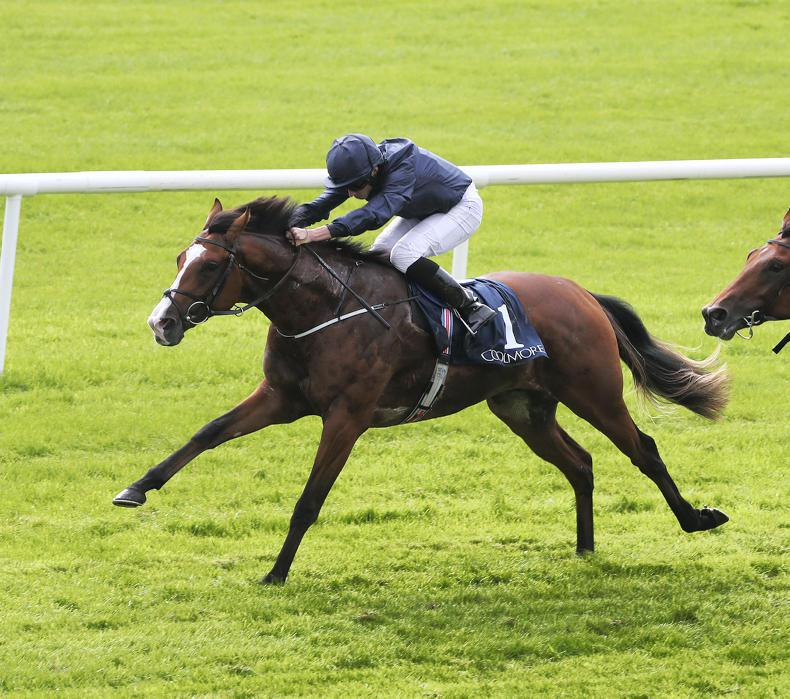 CURRAGH SUNDAY: Anthony Van Dyck to progress again
