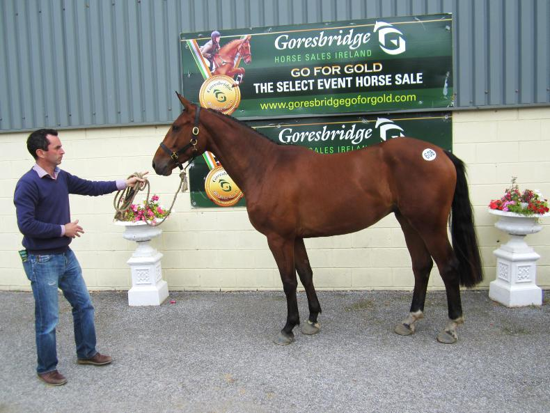 GORESBRIDGE SALES:  OBOS Quality 3yo tops sale at €15,700