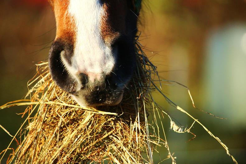 HORSE SENSE: Feeding only hay may not be the best option