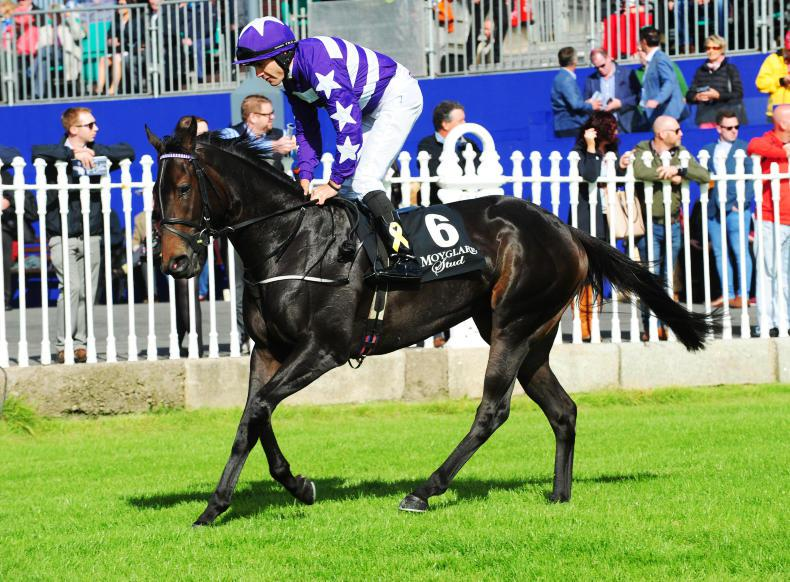 Lady Kaya set to drop in trip for Cheveley Park challenge