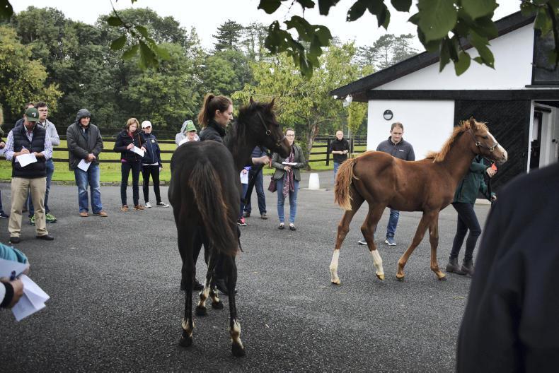 Breeders receive expert advice ahead of foal sales