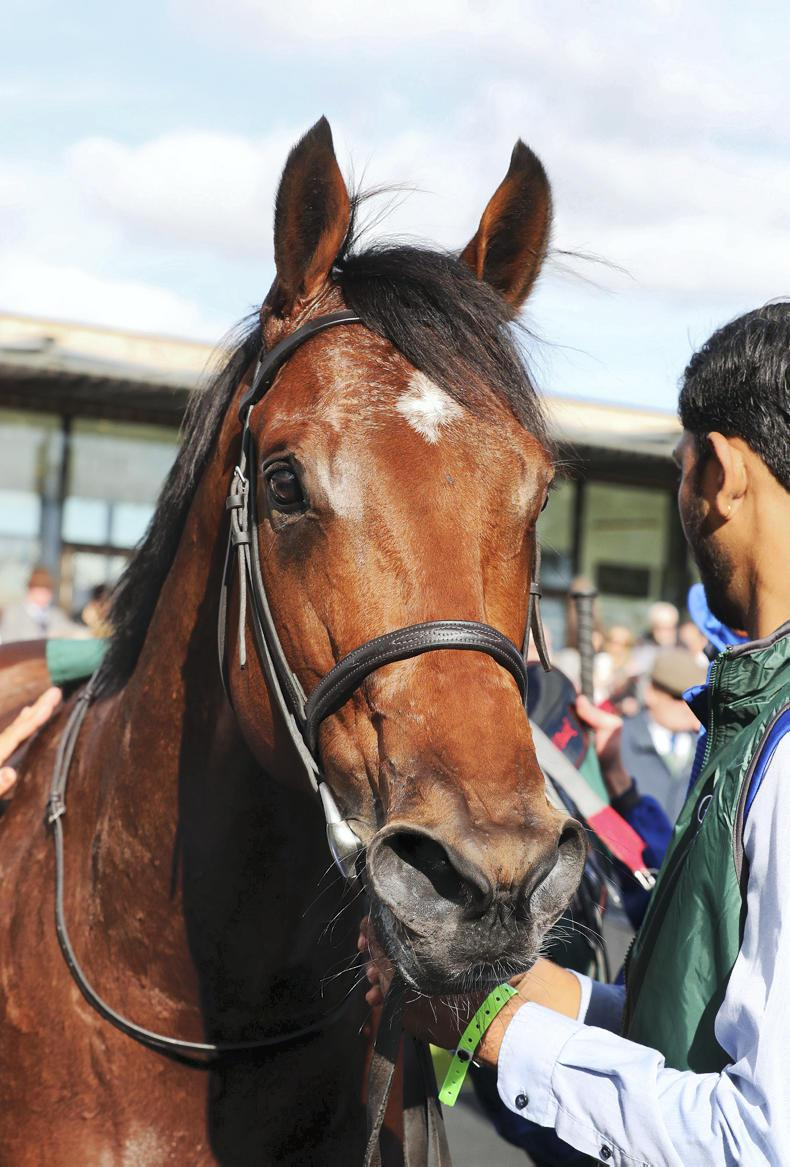 BREEDING INSIGHTS: Dubawi on fire with weekend Group 1 double