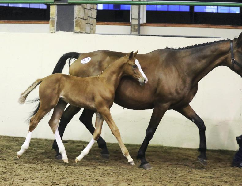 SALES:  Striking colt tops foal at €15,500