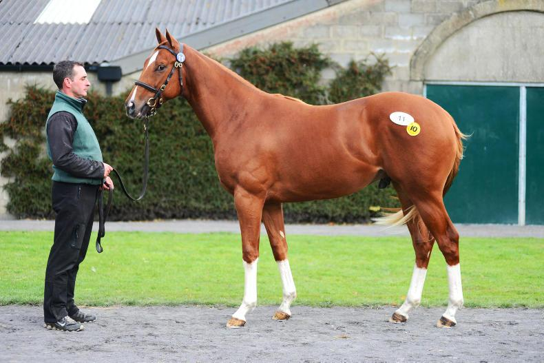 First-crop Night Of Thunder colt stars at the September Yearling Sale
