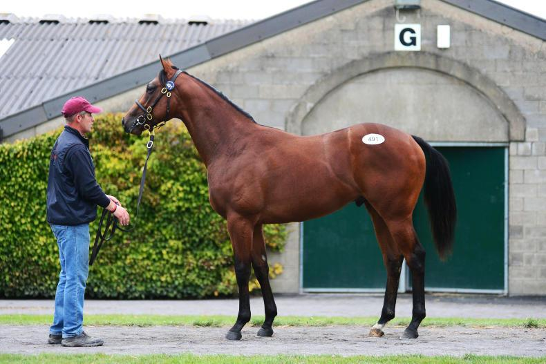 TATTS IRELAND SEPT YEARLING SALE PART 1: Record top price but tough elsewhere