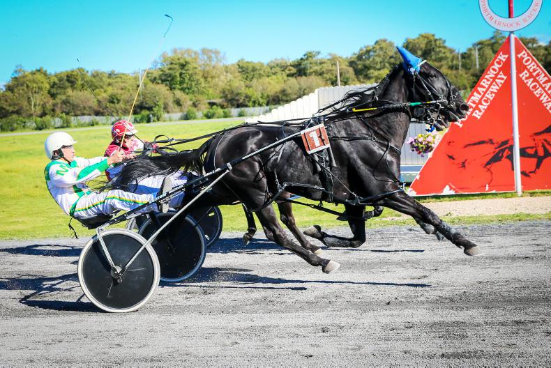 HARNESS RACING: Murphys' double one of many highlights at Portmarnock