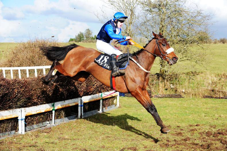 RORY DELARGY: Cobalt – what about the horse?