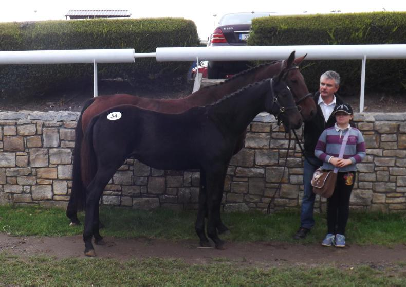 SALES:  Sligo Candy Boy colt foal tops sale at €5,500