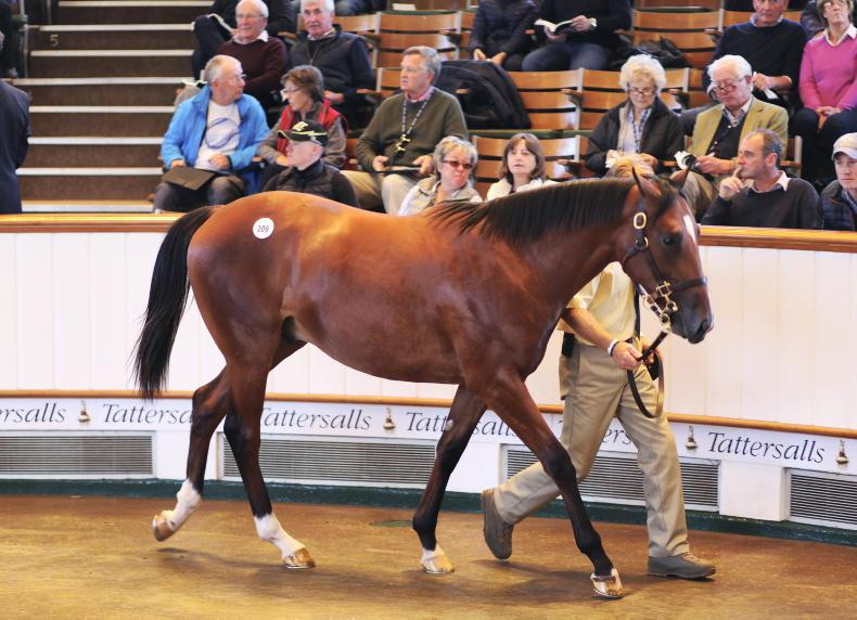 VIDEO: Coolmore spends 3.4 million on Galileo colt