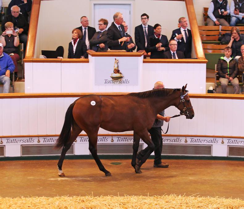VIDEO: Qatar Racing buys Too Darn Hot brother for 3.5 million guineas