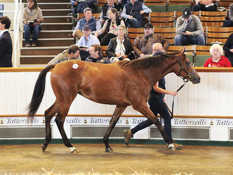 Barronstown Stud-sold filly shares joint-top honours in final Book 1 session