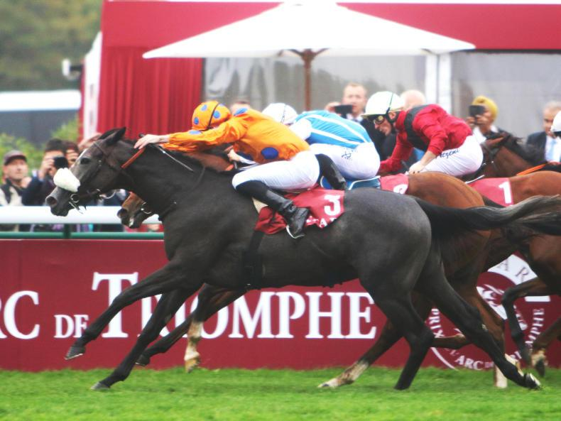 BREEDING INSIGHTS: Turning €15,000 yearling into a millionaire