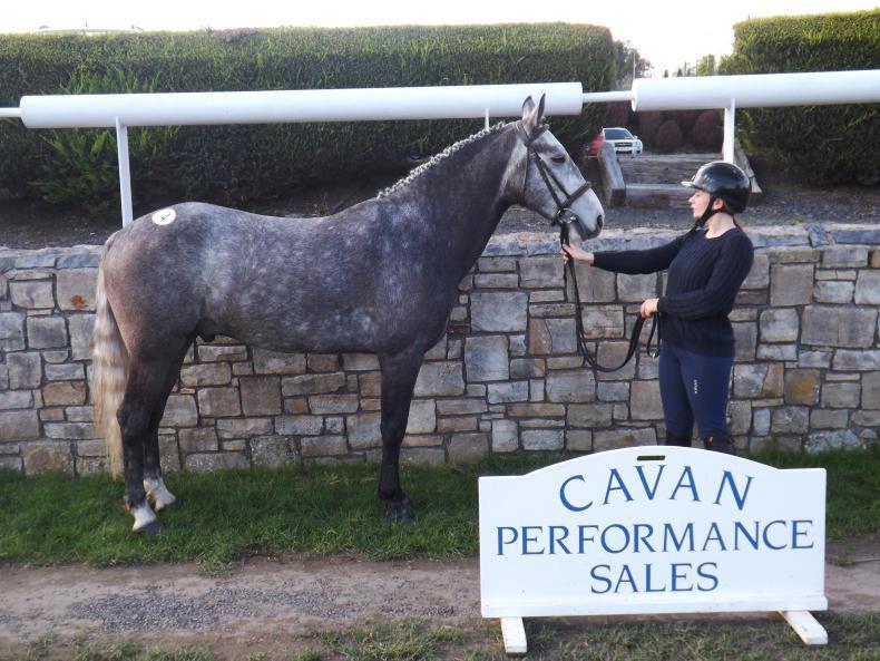 CAVAN SALES: Pacino son tops inconsistent Cavan sale