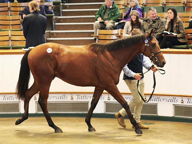 Kingman colt leads the way at 750,000gns