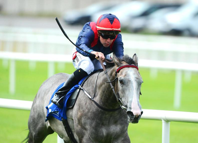 NEWS: O'Callaghan aiming to Light up Leopardstown again