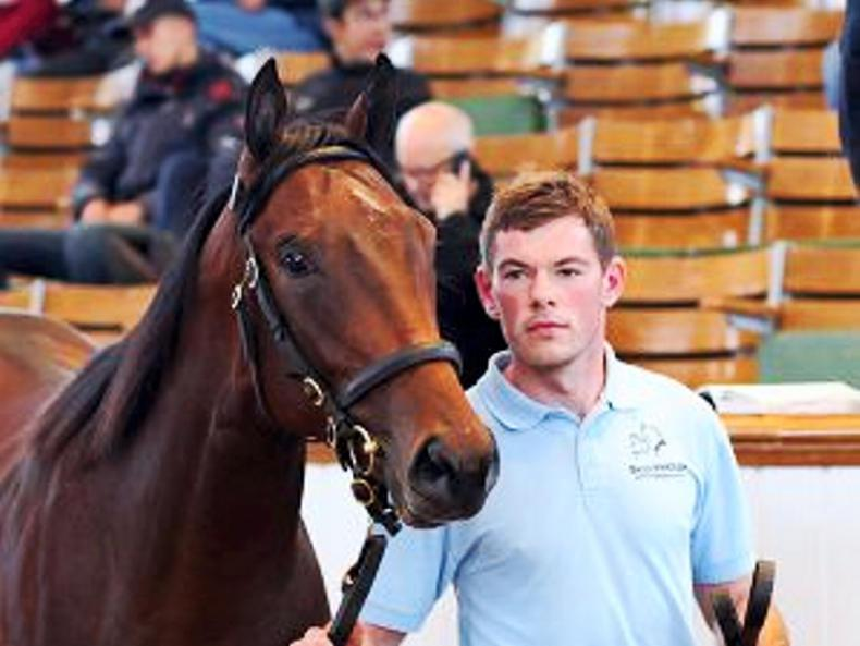 TATTERSALLS OCTOBER YEARLING SALES: And it's No Nay Never for the McCartans