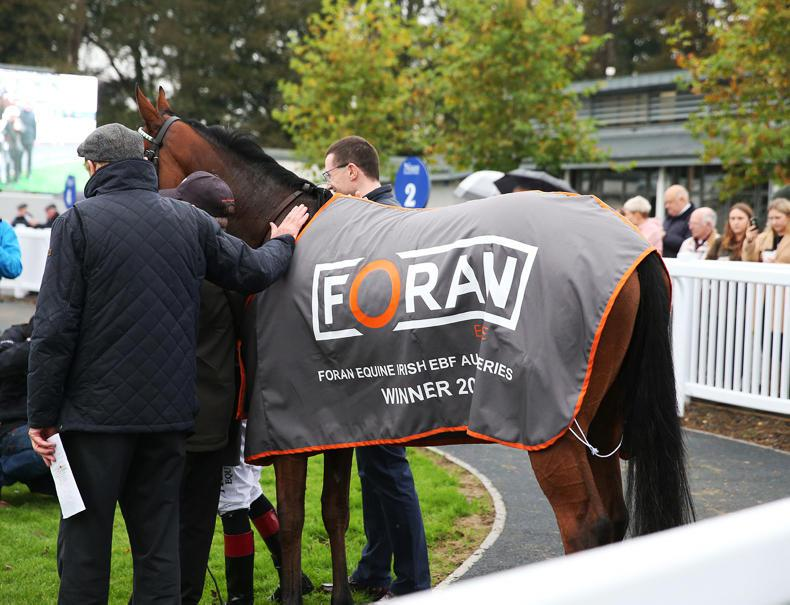 FORAN EQUINE: A series that works well for everyone