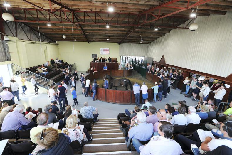 GORESBRIDGE THOROUGHBRED SALES: Potential young talent on offer