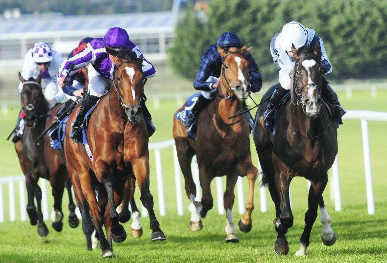 NAAS: Group standard maintained for adopted races