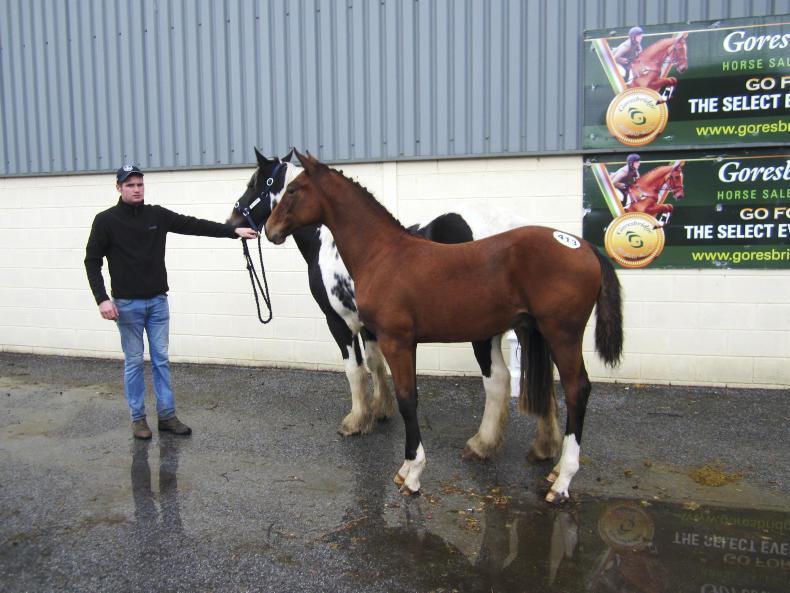 GORESBRIDGE SALES:  Colt foal by Emerald tops sale at €16,000