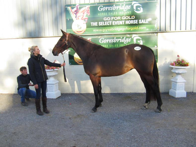 GORESBRIDGE SALES:  Steady trade returns top lot of €17,500