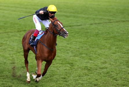 Stradivarius goes the distance at Ascot to round off brilliant campaign