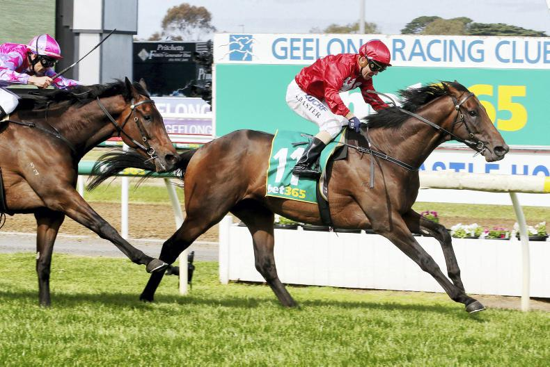 Withhold out of Melbourne Cup after Geelong Cup flop