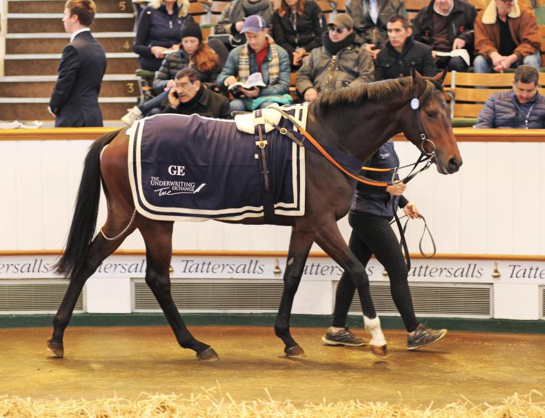 Three Irish two-year-olds added to Newmarket sale