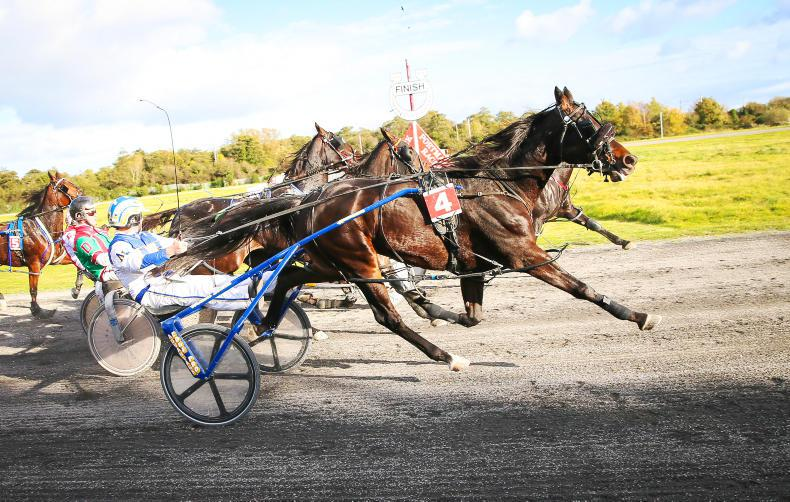 HARNESS RACING: Shadow grabs the spotlight