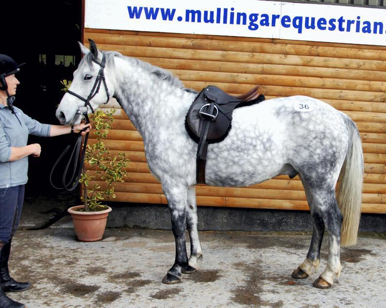 MULLINGAR SALES: Derwin pays top price of €5,000 at Mullingar sale