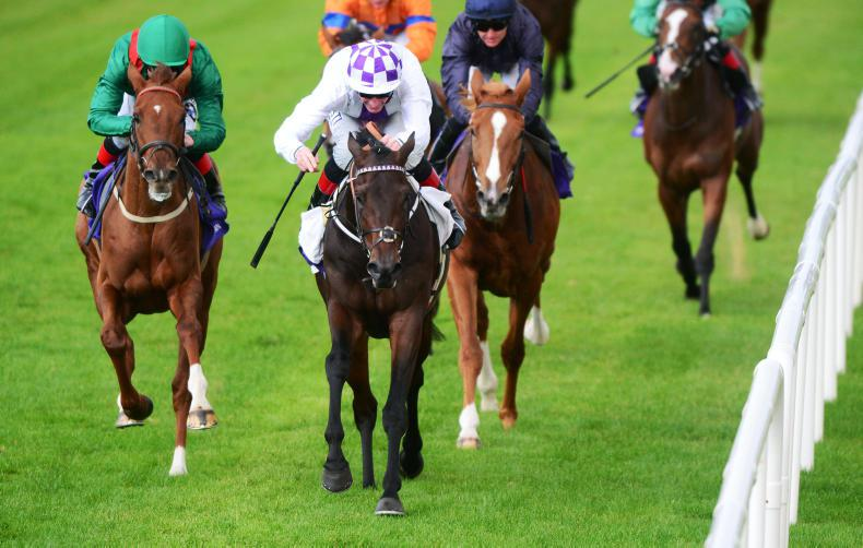 LEOPARDSTOWN SATURDAY: Guaranteed for more success