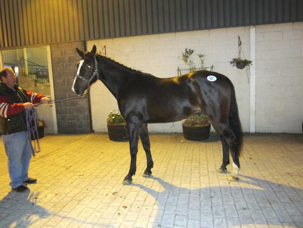 Lancelot gelding commands top price of €9,500