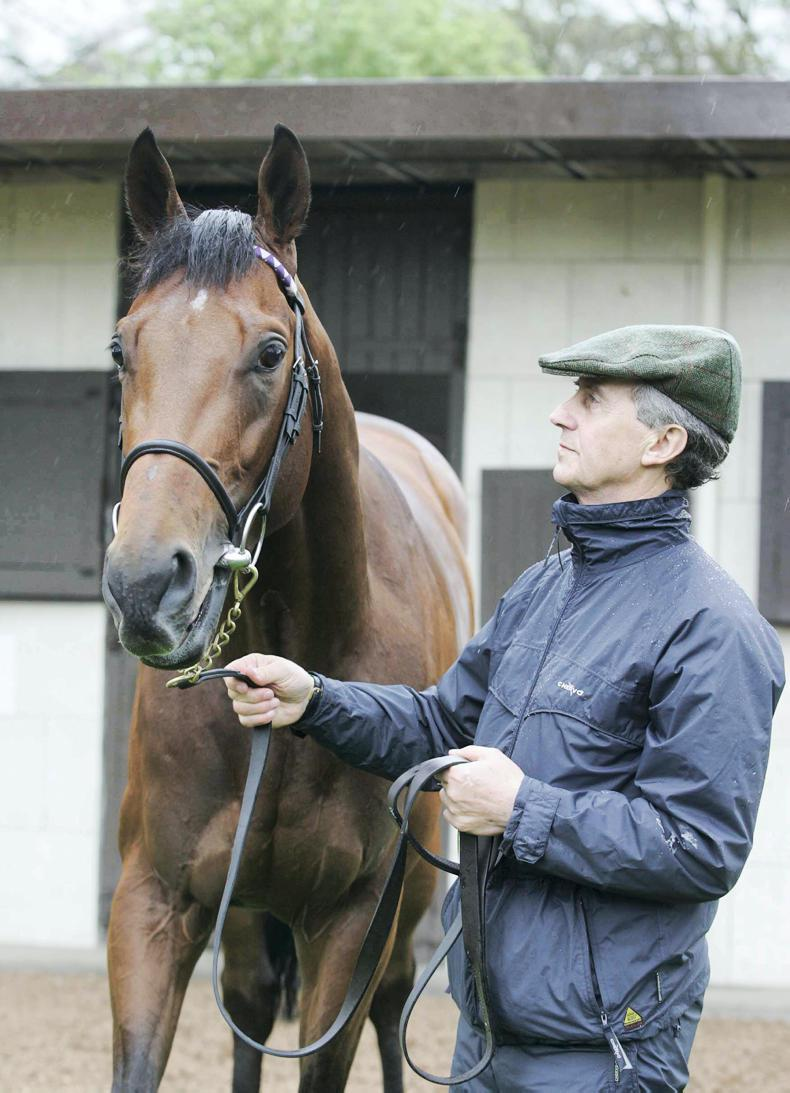 BREEDING INSIGHTS: Guaranteed success for Jim Bolger