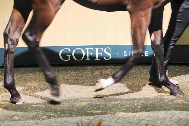 Subdued demand on opening day of Goffs Autumn Yearling Sale
