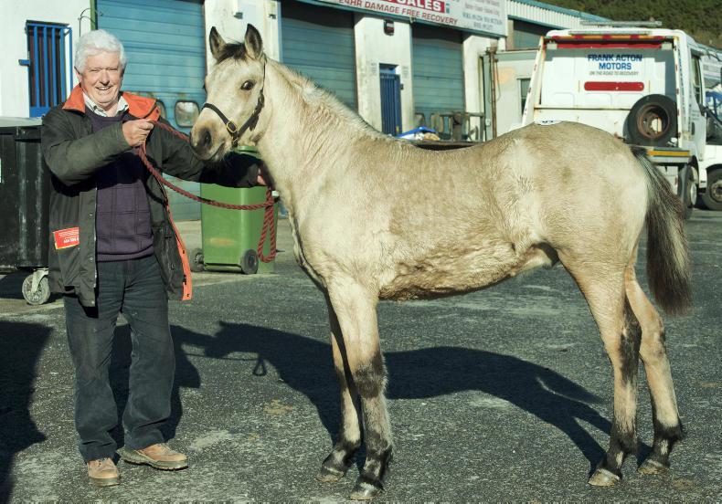 IRISH HORSE WORLD FIXTURES, NOVEMBER 3rd 2018